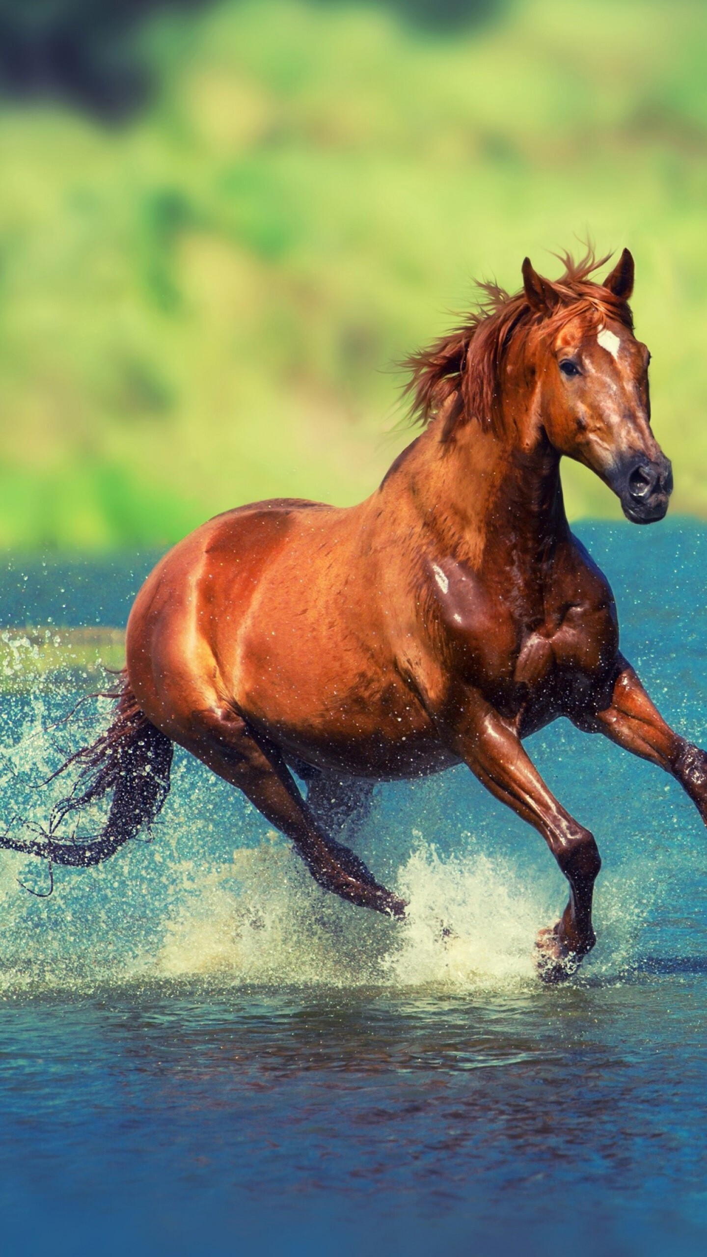 Horse Running in Water Wallpaper | Wallpapers Share