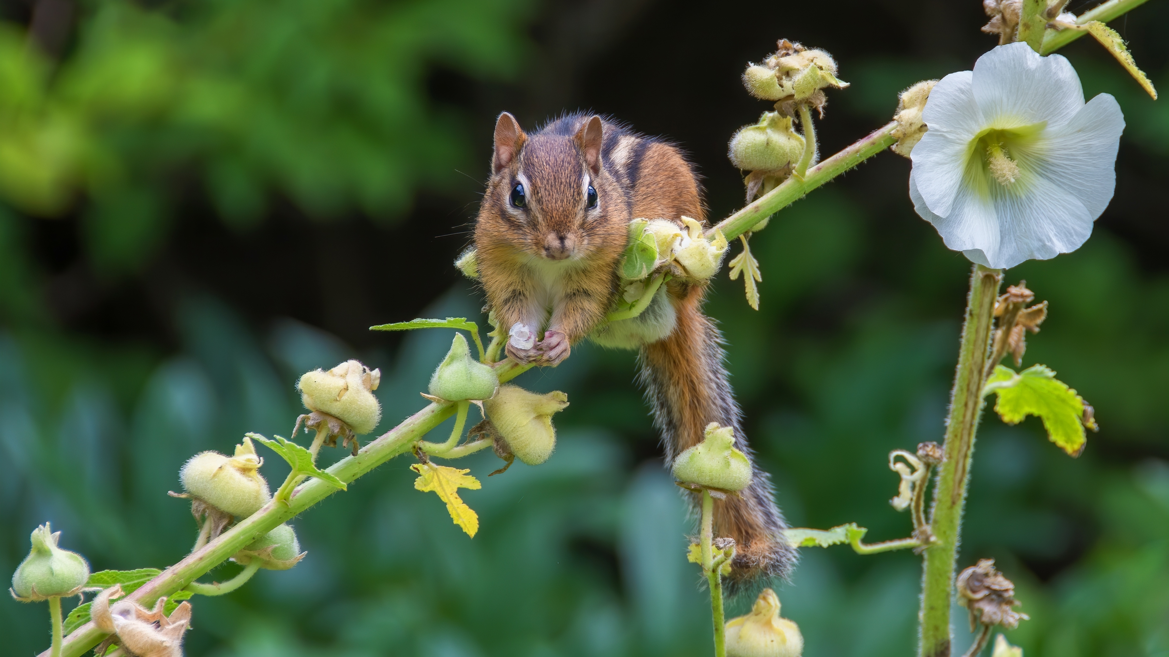 Indian Squirrel 4K Wallpaper | Wallpapers Share