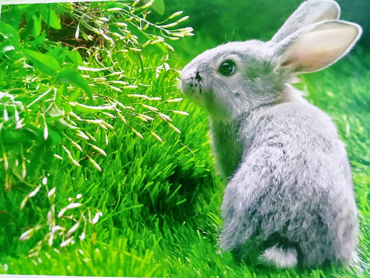 Beautiful Rabbit in Garden