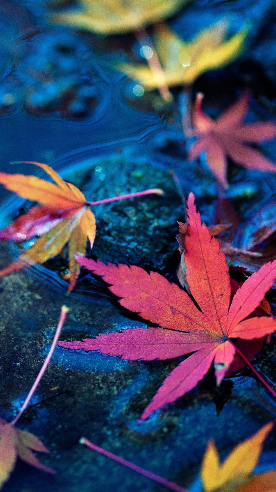 Colorful Leaves on the Floor Pic