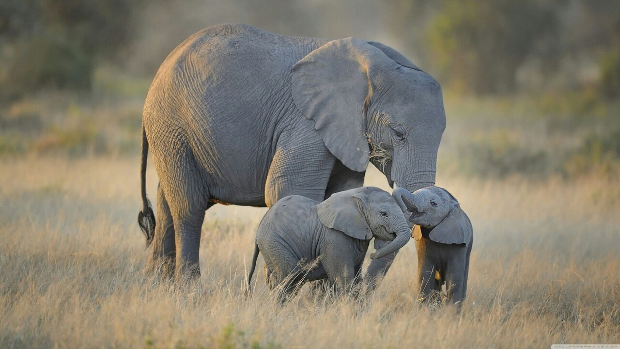 Elephant with Cute Babies