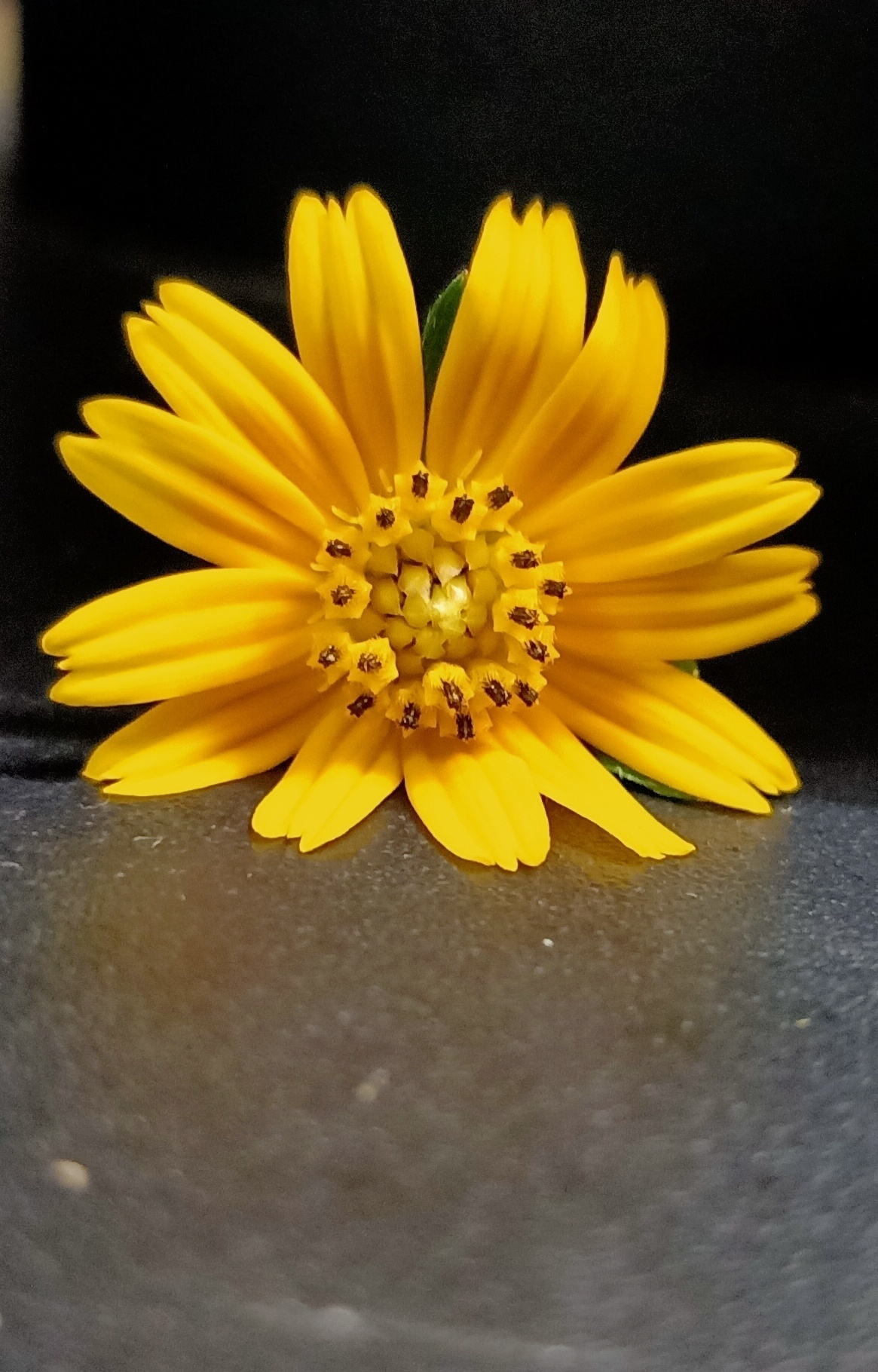 Tiny Sunflower Mobile Photo