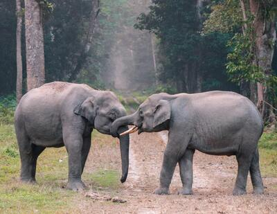 2 Elephants in Jungle