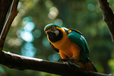 5K Photo of Macaw Parrot