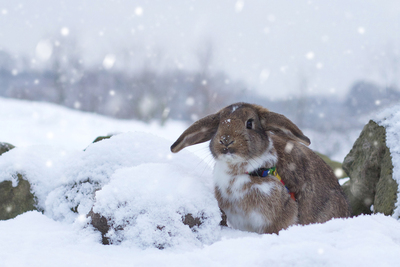Adorable Rabbit in Snowy Weather