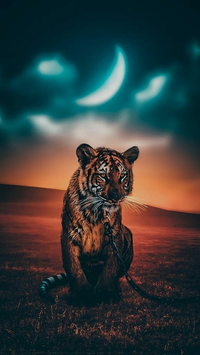Amazing Mobile Background Pic of Tiger