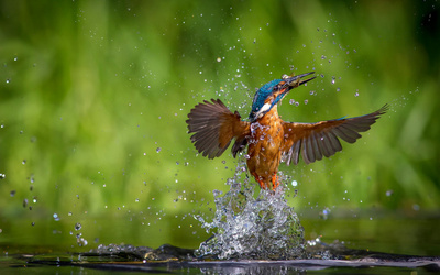 Amazing Photo Shot of Kingfisher in Water