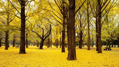 Autumn Trees Forest HD Pic
