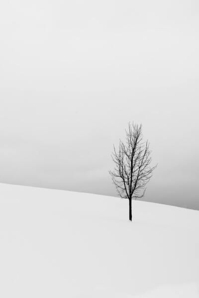 Bare Tree in The Middle Field Covered in Snow