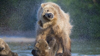 Bear Water Wash Photography