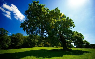 Beautiful Big Green Tree at Day View