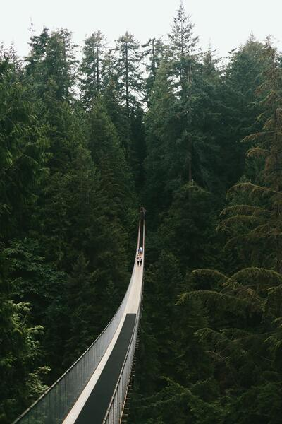 Beautiful Bridge in Between High Trees