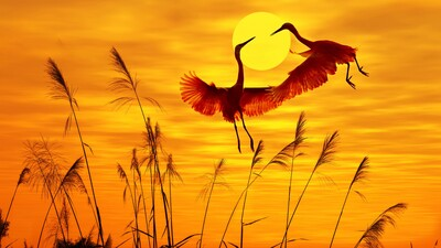Beautiful Cranes Photo