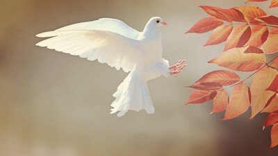 Beautiful Flying White Dove