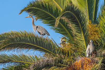 Bird Heron on Tree