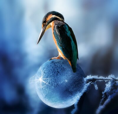Bird Kingfisher Wallpaper
