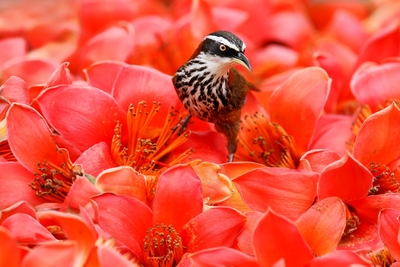 Bird Sitting On Flowers Bed