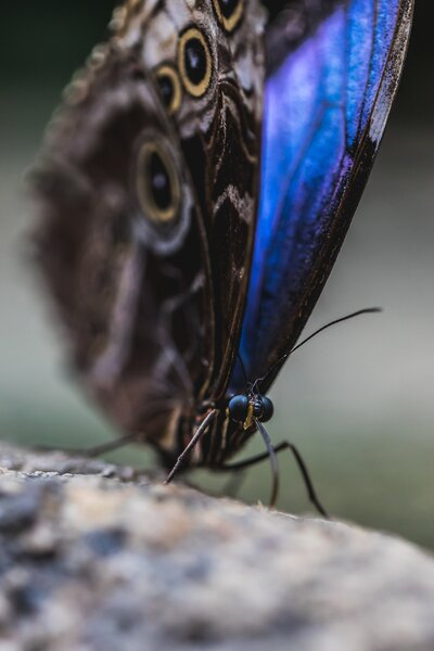 Blue And Purple Butterfly On Tree Mobile Macro Photography