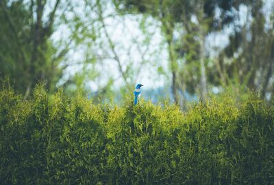 Blue Jay Sitting On Bush Bird Wallpaper