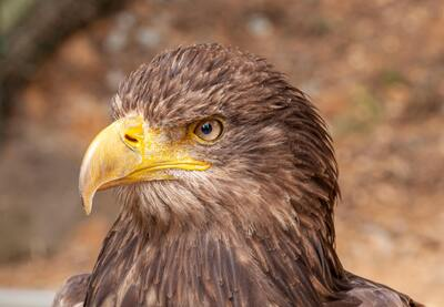 Close Up Photo Of An Eagle