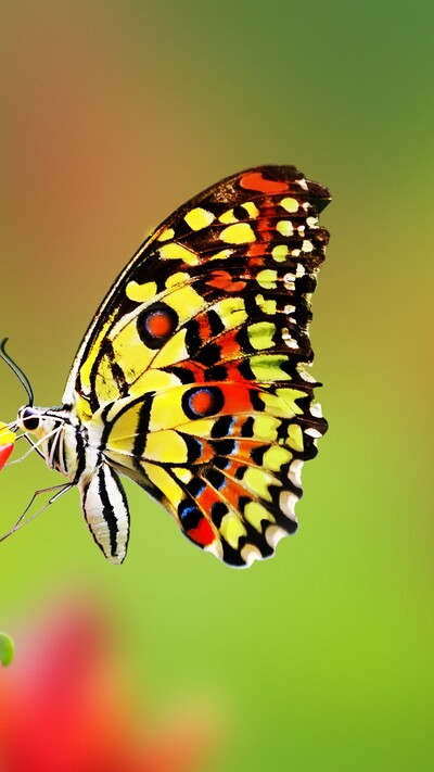 Colorful Butterfly Mobile Image