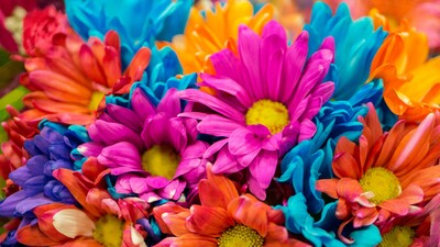 Colorful Flowers 4K