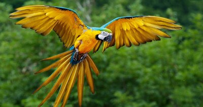 Colorfull Parrot Bird Ultra High Defination Pic
