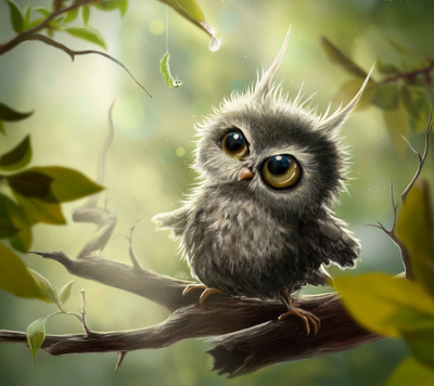 Cute Little Baby Owl Pic