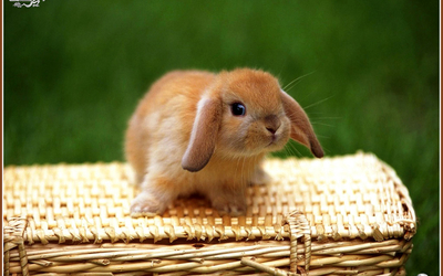 Cute Rabbit on Craft