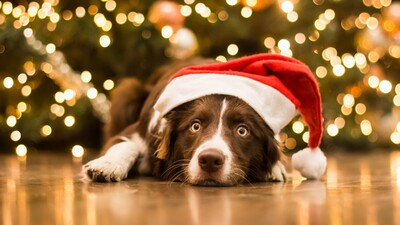 Dog Celebrating Christmas