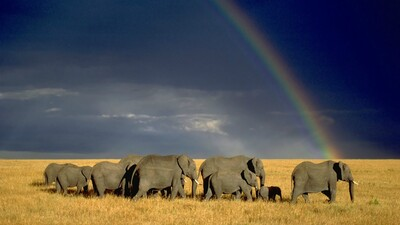 Elephant and Rainbow HD Wallpaper