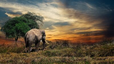 Elephant in The Field Amazing 4K Desktop Wallpaper