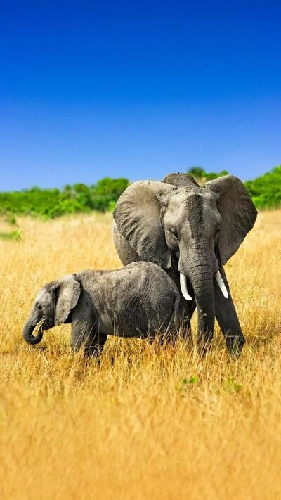Elephant with Baby Animal Photo