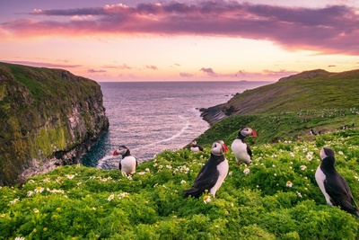 England Puffin Birds Wallpaper