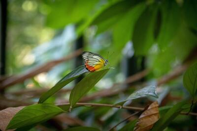 Focus Photography of Butterfly