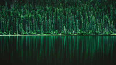 Forest Green Tree Lake