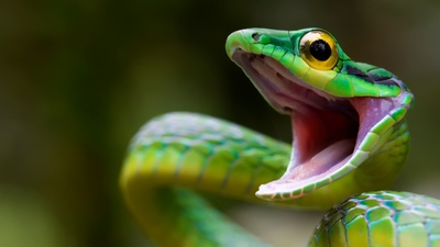 Green Snake HD Photo