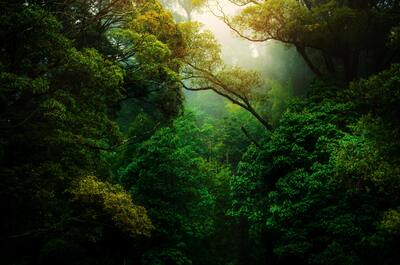 Green Trees in Jungle Nature Photo