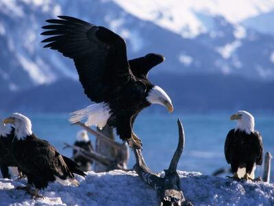Group of Eagle Birds