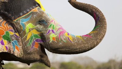 Indian Elephant Culture Decoration