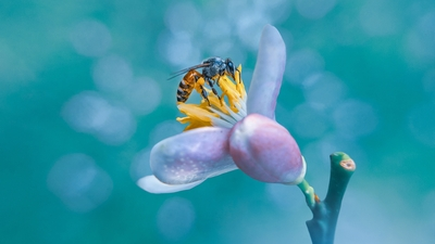 Insect in Flower HD Wallpaper