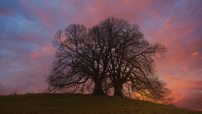 Leafless Tree on Hill Under Bright Sky at Sundown