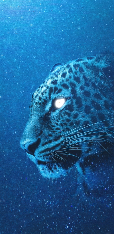 Leopard Blue Background Photo