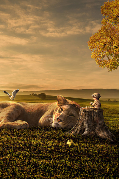 Lion Sleeping in Front of Cute Baby Creative Photo