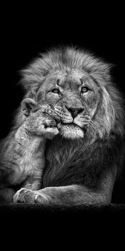 Lion With His Baby Cub