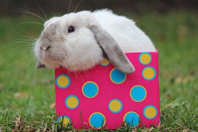 Lovely Rabbit in Gift Box