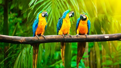 Macaw Parrot Bird Sitting on Row