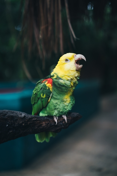 Mobile Image of Green and Yellow Parrot Bird
