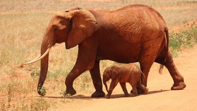 Mother Elephant with Her Cute Baby