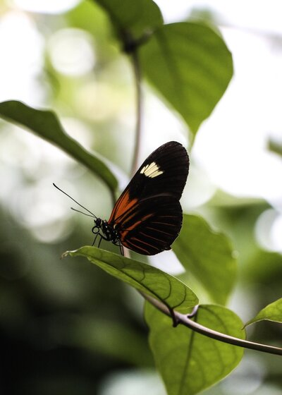 Orange And Black Butterfly On Plant Branch